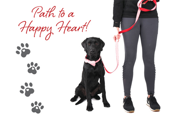 Pets path to healthy heart AHA collar leash