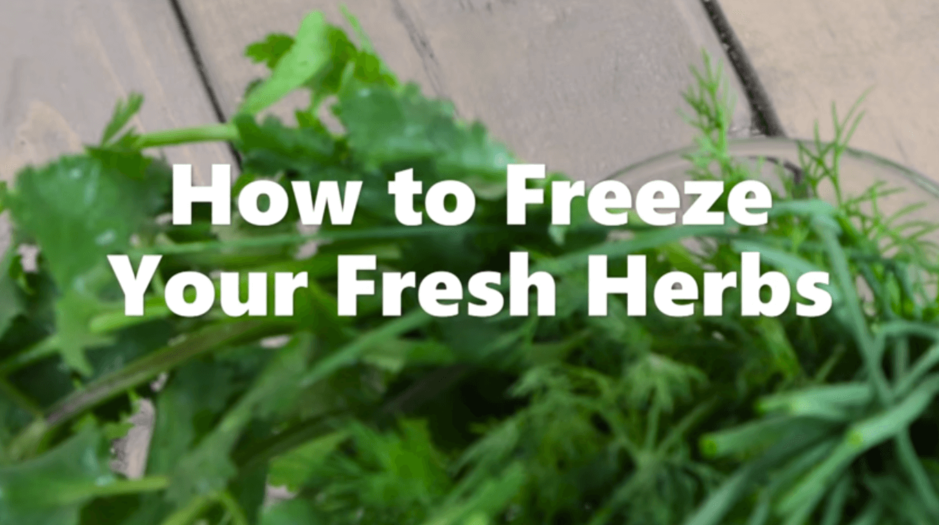 How to Freeze Your Fresh Herbs